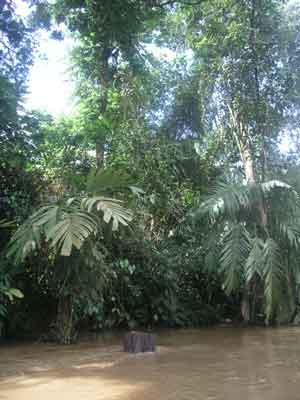 Rio de Manu